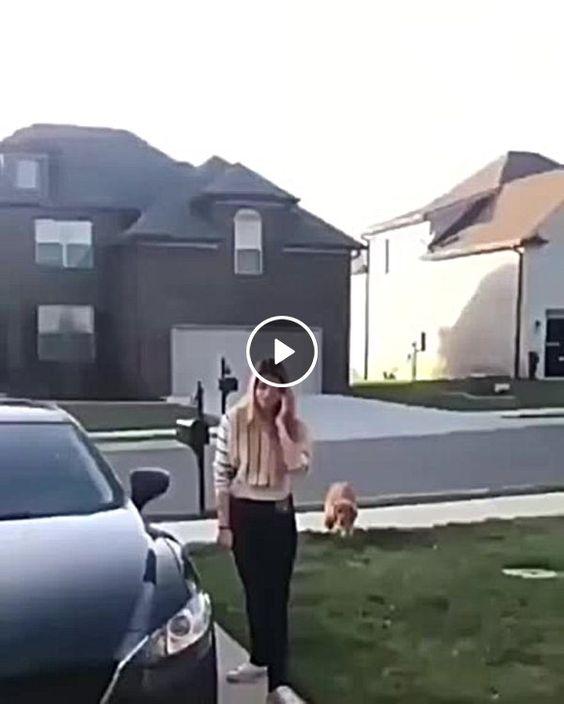 cachorro esperto