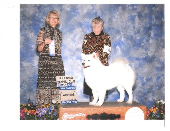 Braveheart's High Prairie Rose wins her Championship in Abq - May 2013