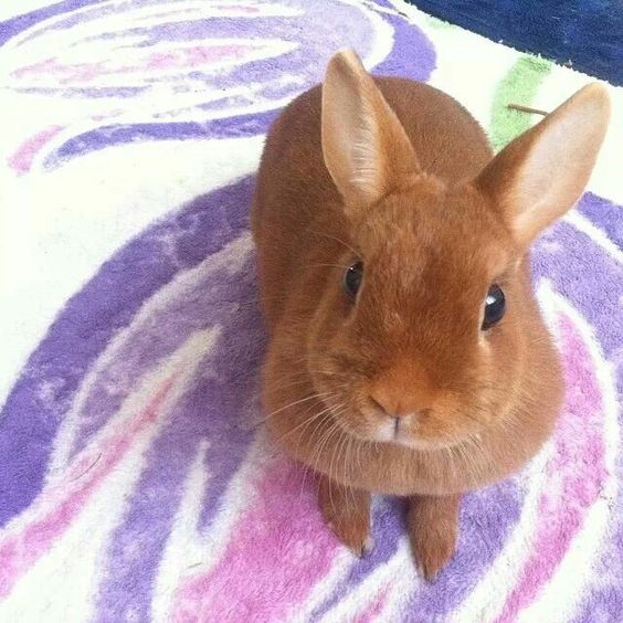 Cute bunny listens attentively