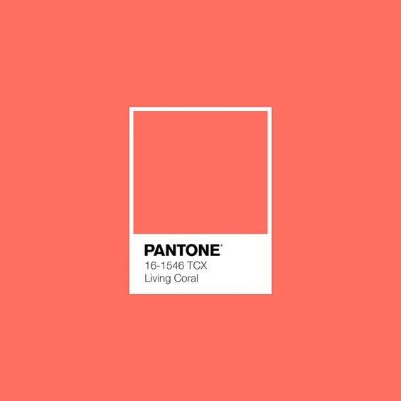 What do you think? Yesterday Pantone announced it's colour of the year for 2019 - Living Coral 🦀🦑🦐  #pantone #color #colour #graphicdesign #design #paint #illustration #interiordesign