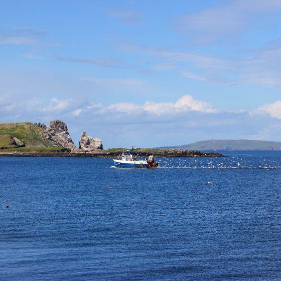Feeding frenzy off the coast of Howth, Ireland