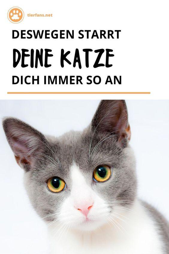 Pin Auf Katzenpsychologie Korpersprache Und Denkweisen Von Katze Kater