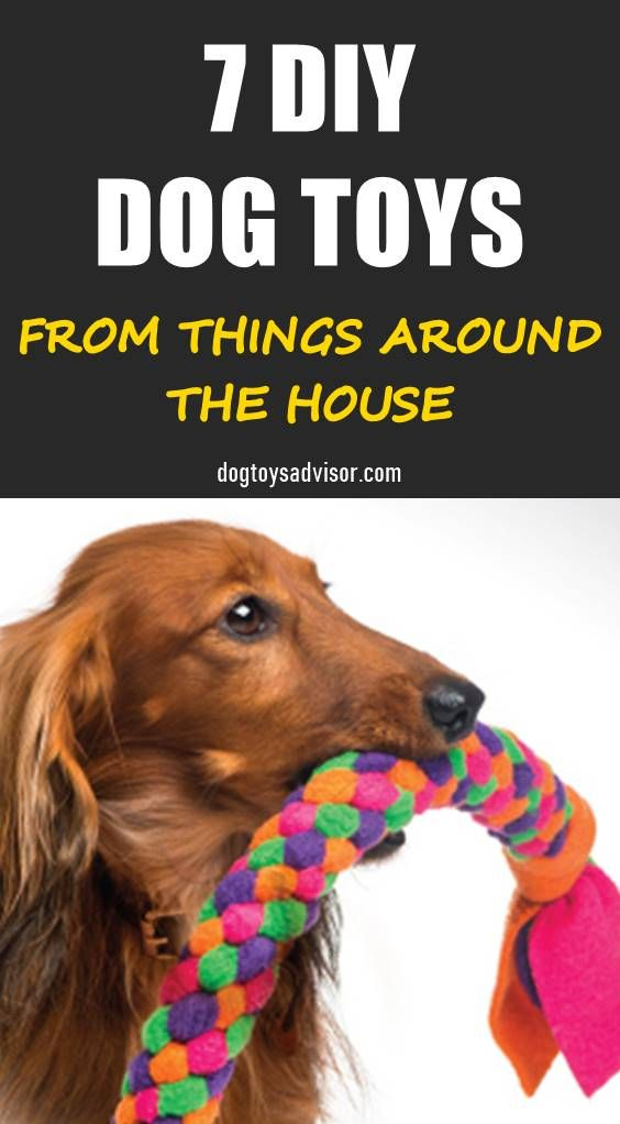 You Don T Need To Pay For Dog Toys Here Are 7 Easy To Make Diy