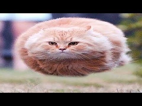 500 Fail Try Not To Laugh Challenge Impossible Dank Meme Tik Tok Compilation 2020 Clean Youtube Hover Cat Animals Cats