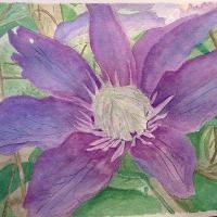 purple clematis, getting darker