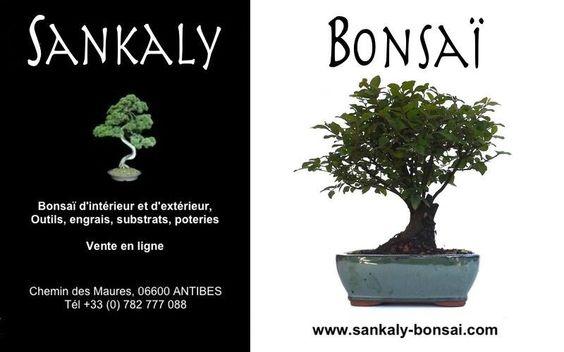 Un petit Bonsaï idéal pour débuter à moindre frais. Ce Sageretia Theezan de 25 cm est disponible à la vente en ligne chez www.sankaly-bonsai.com  http://www.sankaly-bonsai.com/achat-vente-acheter-bonsai-interieur-sankaly-bonsai/3123-vente-de-bonsai-d-interieur-sageretia-theezans-25-cm-sag140901.html