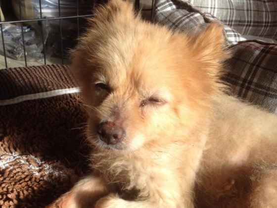YOUCARING.COM - RED HOOK DOG RESCUE - 9/13/16 - PLEASE HELP!! Smokey was badly…