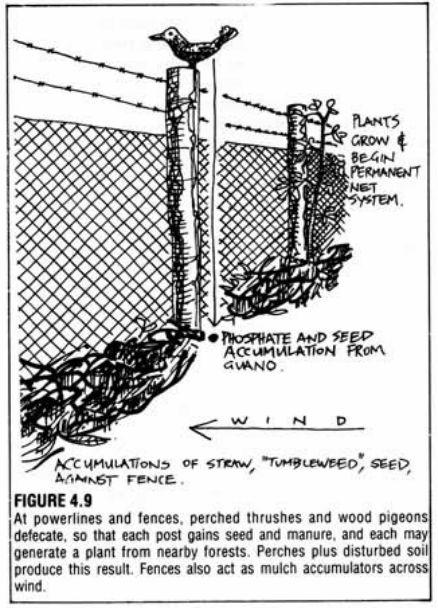 fences accumulate manure
