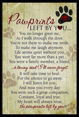 rainbow bridge poem for dogs - Google Search: