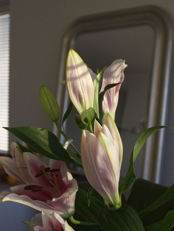 Lilies in the sunshine, home decoration at Syyskuun kuudes