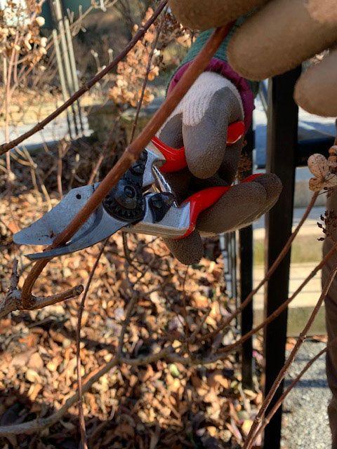 Your Guide To Winter Pruning Finegardening Prune Pruning Roses Tree Pruning