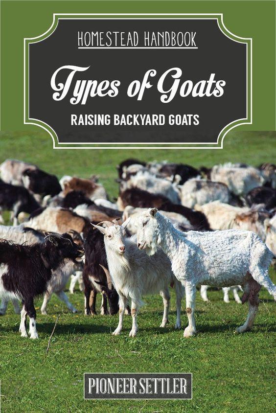 Raising, Homesteads and Goats on Pinterest Raising Goats