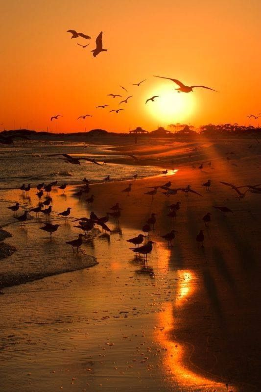Seagulls at the sunset beach: