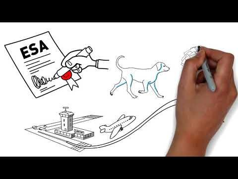 Emotional support animal (ESA) letters in 24 hours or less. Touch ESA  offers the ESA letter for housi… | Emotional support animal, Animal  letters, Emotional support