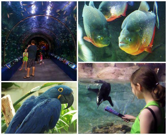 New Orleans Day 3 Aquarium Of Americas Audubon Zoo