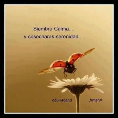 siembra calma cosecharas serenidad
