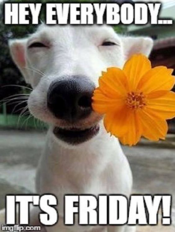 Are You Looking For Ideas For Good Morning Handsome Browse Around This Site For Very Best Good Funny Weekend Quotes Funny Good Morning Quotes Its Friday Quotes