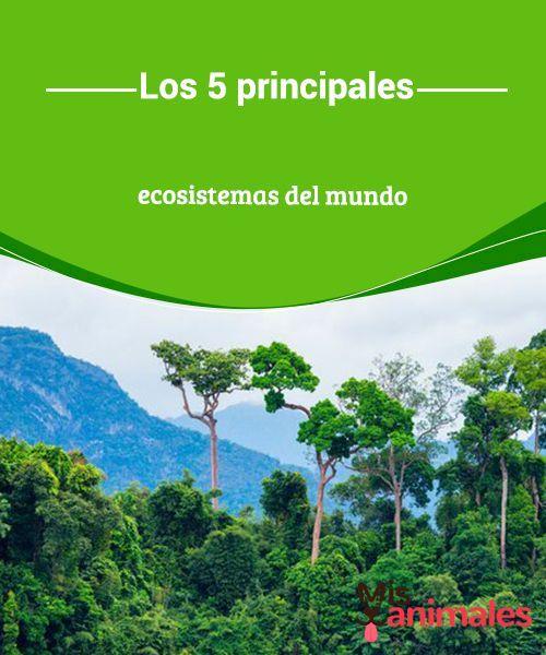 Los 5 Principales Ecosistemas Del Mundo Mis Animales Ecosistemas Cuales Son Los Ecosistemas Biomas