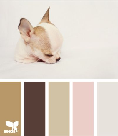 Puppy tones.  I love this and want a whole room in these colors.  With this pup in it :)