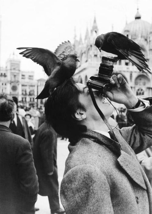 Really like this one. A photo of a guy taking another photo with the birds focused on him.