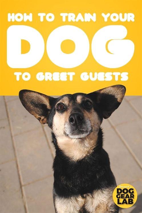 Dog Training Larry Krohn Dog Training Quiet Command Dog