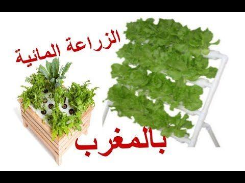 اعمل نظام زراعة مائية في البيت بكل سهولة Youtube Herbs Food