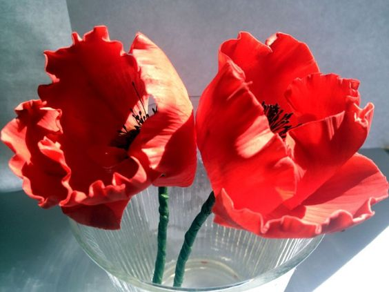 Poppies-close-up-2