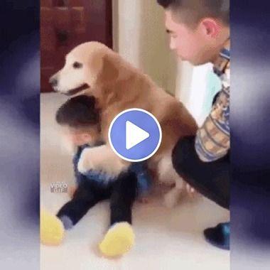 Criança com seu cachorro protegendo do pai