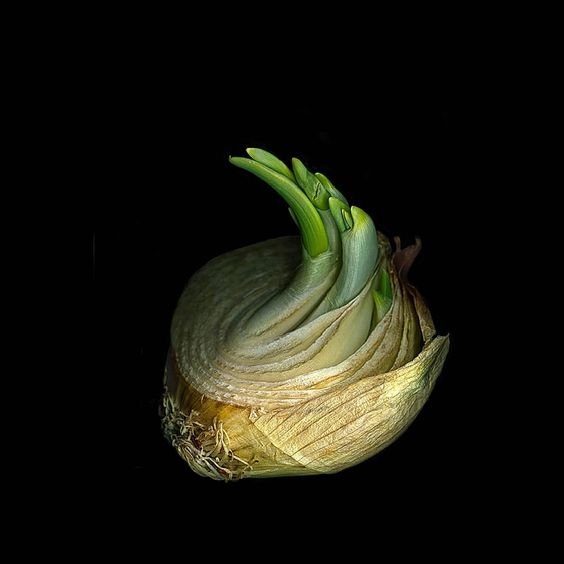 Onion 1 | Jerry Freedner | From a unique collection of still-life photography at https://www.1stdibs.com/art/photography/still-life-photography/