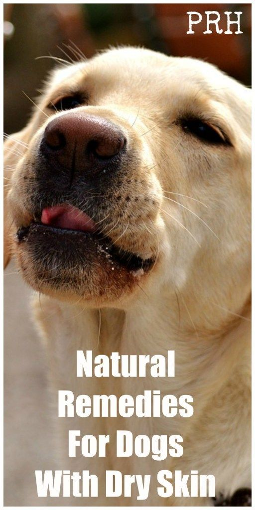 Natural Remedies For Dogs With Dry Skin Dry Skin