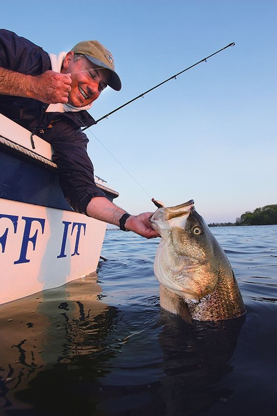 Striped bass fishing in virginia