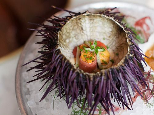 Sea Urchin / Alice Gao
