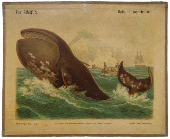 Walfisch - Irenaeus Kraus - 20th Century Ephemera
