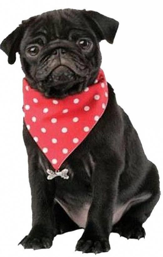 Figure Out Additional Relevant Information On Puggy Look Into