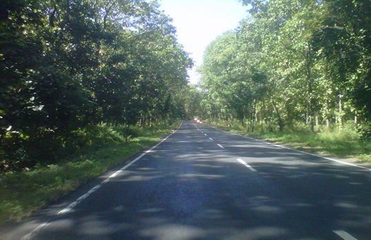 Foto Gambar Keindahan Pemandangan Alam Jalan Hutan Taman Pemandangan Alam Gambar