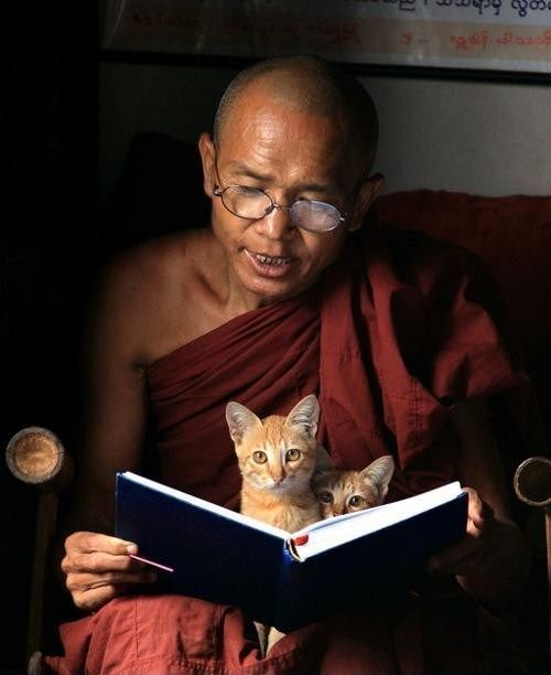 "Monk Chanting with Kittens. Photograph by Rob Kroenert, who says: ""I didn't see the kittens at first--they only popped up when they heard the sound of my camera."":"