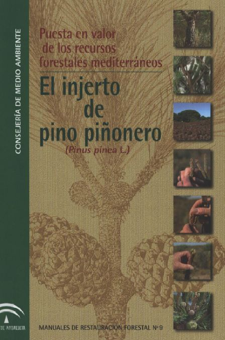 El injerto de pino piñonero. Andalucía