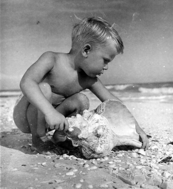 Chad Wade Brome on the beach with horse conch shell - Sanibel Island, Florida.  Date 1948  Collection Florida Photographic Collection  Image Number c009490a