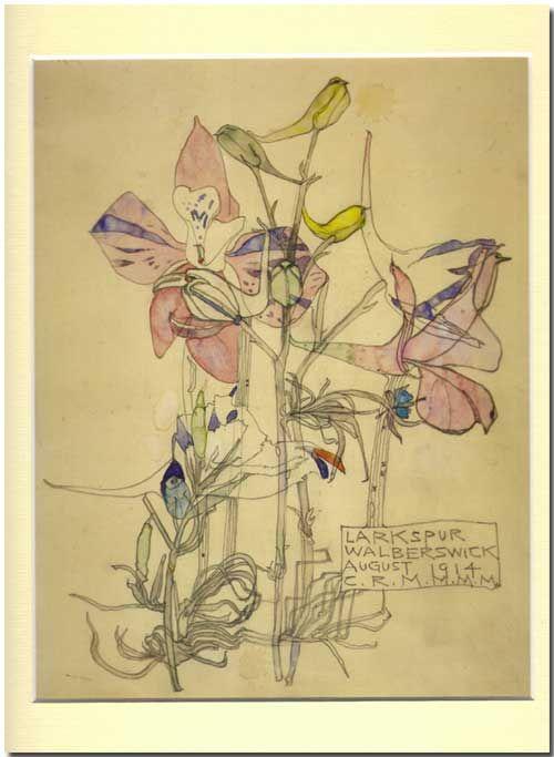 Charles Rennie Mackintosh - Aquarelles Botanique - Pied d'alouette - 1914