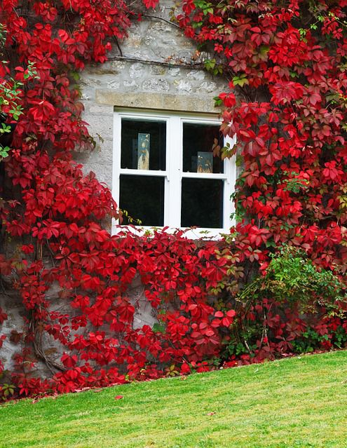 Jakie Pnacze Wybrac Garden Fall Foliage Fall Colors