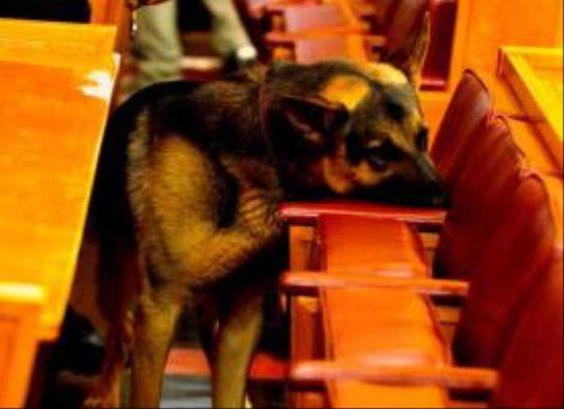 TBMM köpeği Meks göreve başladı