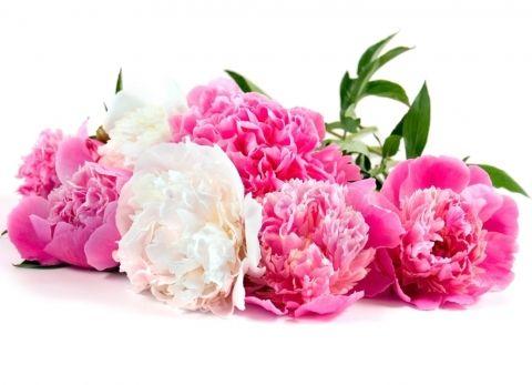 Il Est Bon De Louer Dieu Dorcas Kaja Bouquet De Fleurs Mariage