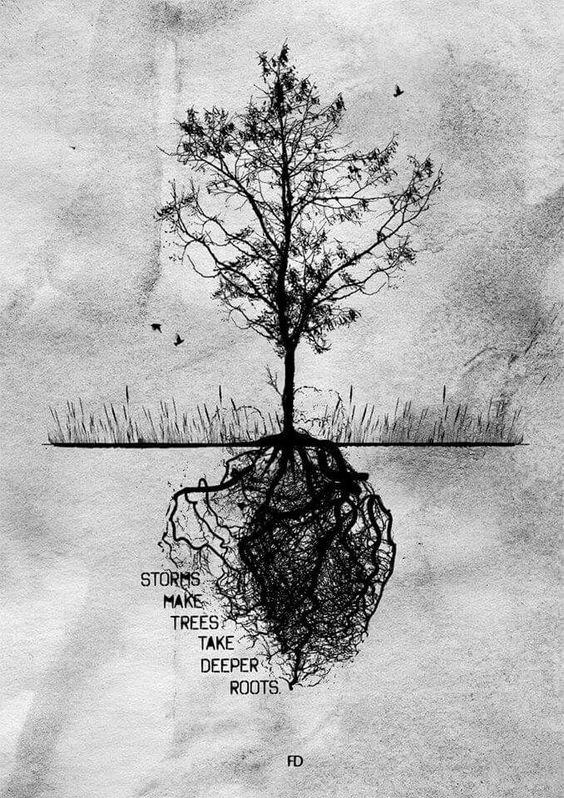 Storm make trees deeper roots!