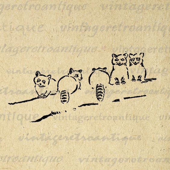 Digital Printable Little Raccoons Download Illustration Graphic Image Vintage Clip Art Jpg Png Eps 18x18 HQ 300dpi No.1659 @ vintageretroantique.etsy.com #DigitalArt #Printable #Art #VintageRetroAntique #Digital #Clipart #Download