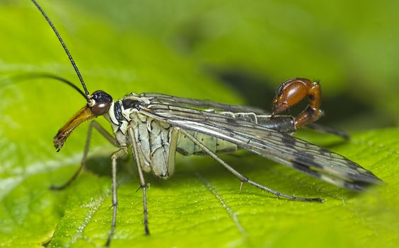 PanoStack of Scorpion Fly by Chris Atkinson on 500px