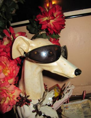 One cool dog at http://www.jewelant.wordpress.com
