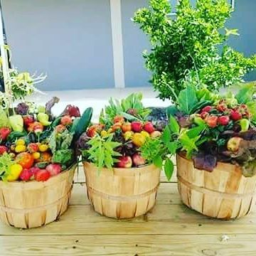 More of the harvest for Urban Decay!  #urbandecay #harvest #urbangardenersrepublic #instagardeners_featuretag #urbanjunglebloggers #jungalowstyle #houseplantjournal #ocregister #orangecountysociety #orangecountyart #costamesa #newportbeach #newportca #lagunabeach #laguna #coronadelmar #balboavillage #balboaisland #huntingtonbeach #santaana #gardenlove #garden #urbangarden #ediblegarden