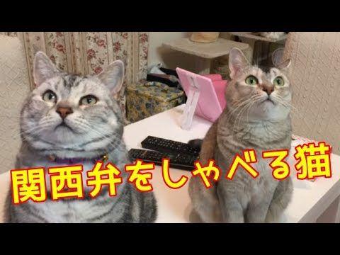 関西 弁 猫 しゃべる 関西弁をしゃべる猫あんなちゃんの留守番 ママが買い物から帰らない