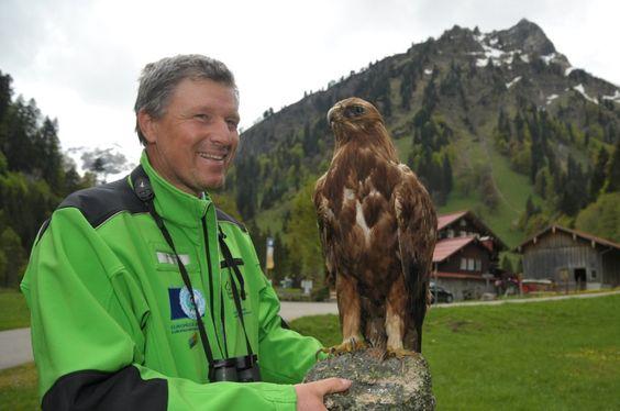 In den deutschen Alpen leben wieder mehrere brütende Steinadler. Auch der Bartgeier, einer der größten flugfähigen Vögel der Welt, lässt sich im Alpenraum wieder blicken.