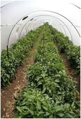 House building green houses and do it yourself on pinterest for Do it yourself greenhouse plans